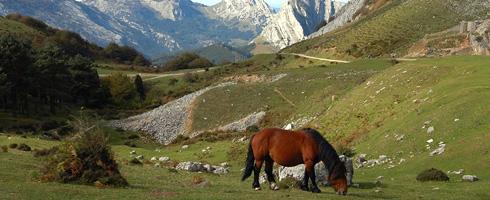 Prados y matorrales en Asuntze. La fauna salvaje se ve acompañada en este hábitat por yeguas, vacas y ovejas